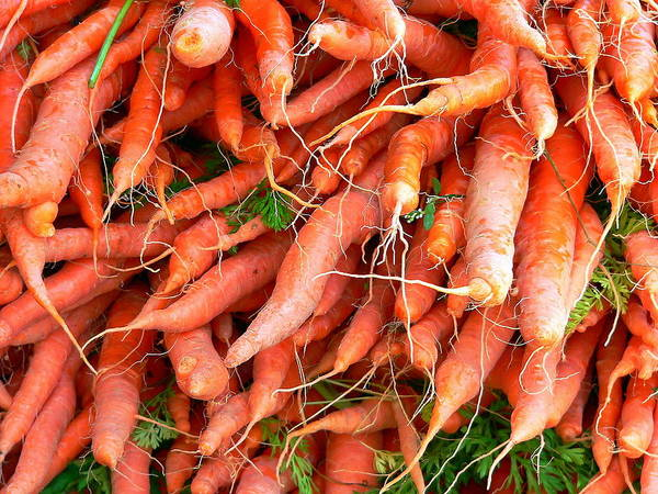 Photograph - Fresh Whole Carrots by Jeff Lowe