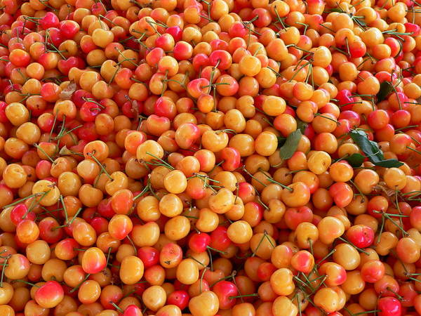 Photograph - Fresh Yellow Cherries by Jeff Lowe