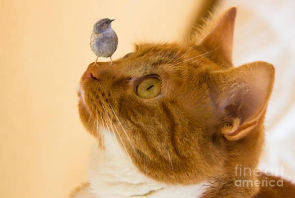 Photograph - Friend Or Foe by Brian Roscorla