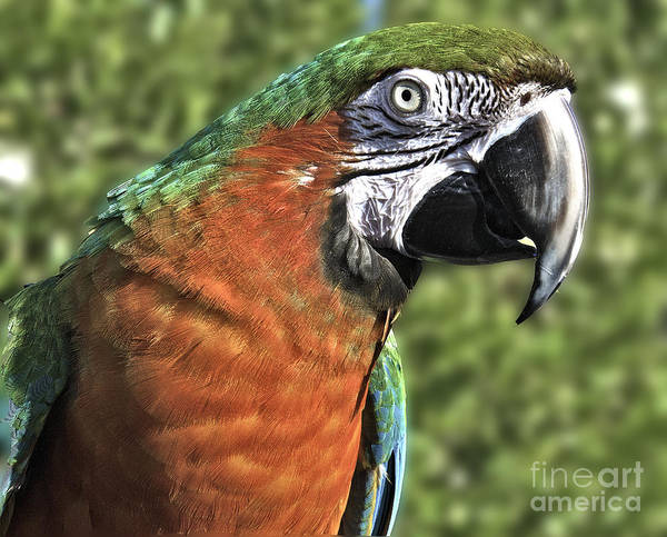Photograph - Friendly Parrot by Mae Wertz