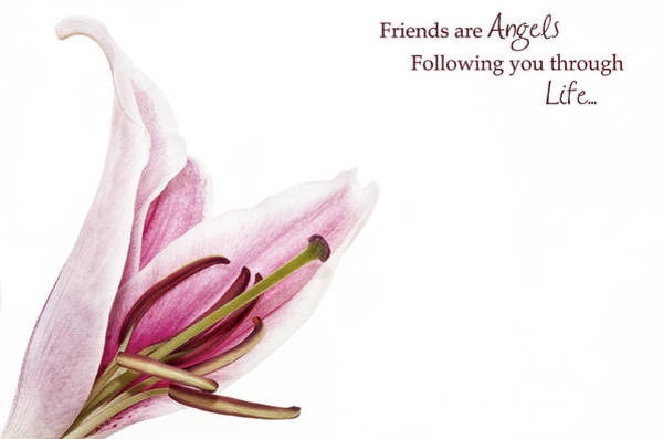 Photograph - Friends Are Angels by Kim Andelkovic