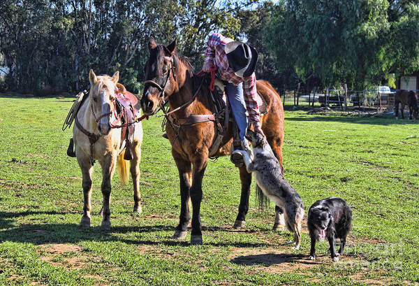 Norco Photograph - Friends by Tommy Anderson