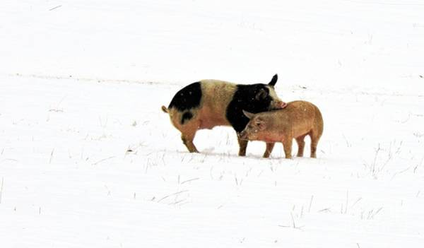 Together Forever Photograph - Friendship # 1 by Marcia Lee Jones