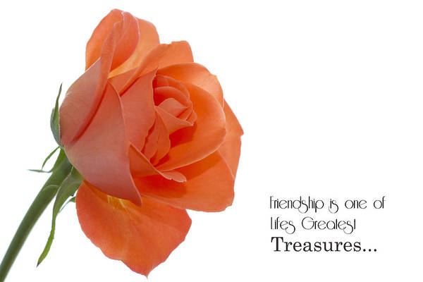 Photograph - Friendship Treasures by Kim Andelkovic