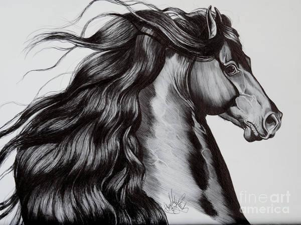 Friesian Drawing - Friesian Head Shot by Cheryl Poland