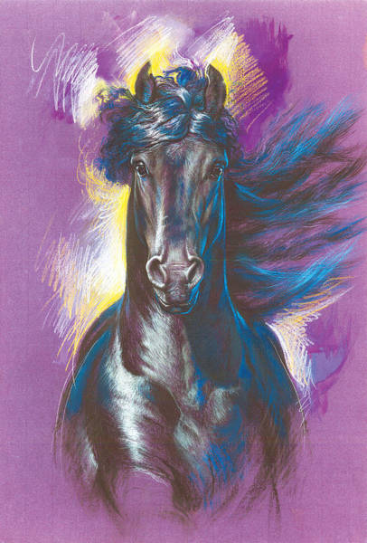 Friesian Horse Photograph - Friesian Horse Variant 1 by MGL Meiklejohn Graphics Licensing