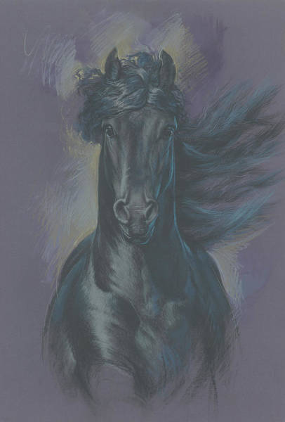 Friesian Horse Photograph - Friesian Horse by MGL Meiklejohn Graphics Licensing