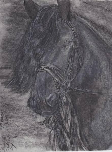 Friesian Drawing - Friesian Love by Laurietta Oakleaf