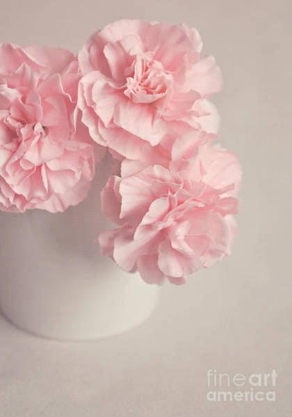 Wall Art - Photograph - Frilly Pink Carnations by Lyn Randle