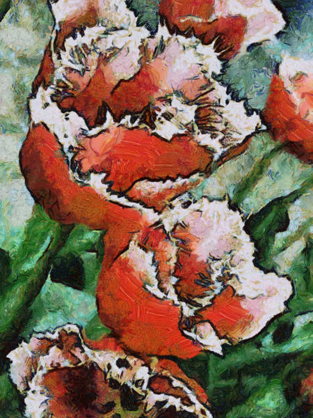 Photograph - Fringed Tulips by Gerry Bates