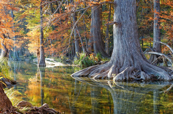 Bald Cypress Wall Art - Photograph - Frio River Morning by Silvio Ligutti