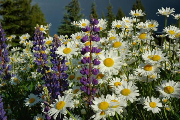 Photograph - Frisco Flowers by Lynn Bauer