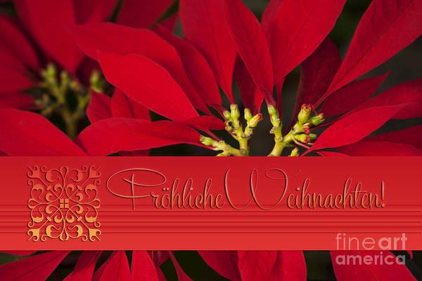 Weihnachten Photograph - Froehliche Weihnachten - Poinsettia  - Euphorbia Pulcherrima by Sharon Mau