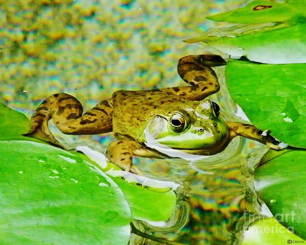 Photograph - Frog  Abby Aldrich Rockefeller Garden by Lizi Beard-Ward