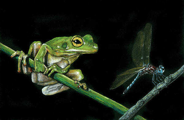 Drawing - Frog And Dragonfly by William Underwood