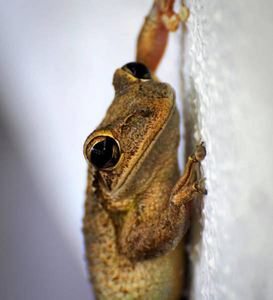 Photograph - Frog by David Hart