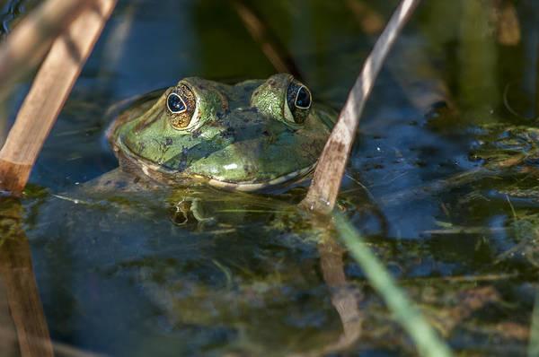 Frog Eyes Art Print