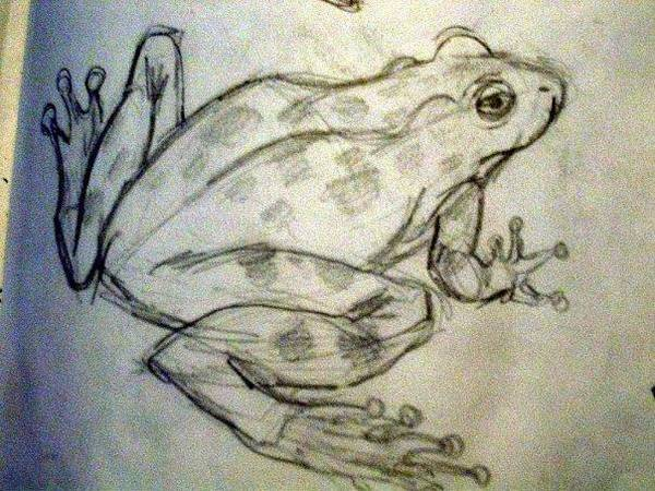 Wall Art - Drawing - Frog by Lauren  Pecor
