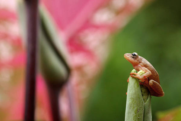 Wall Art - Photograph - Frog On A Leaf In The Garamba National by David Santiago Garcia