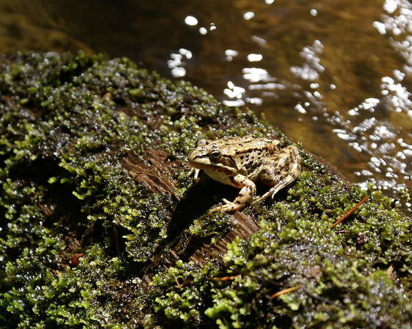 Photograph - Frog On A Log 1 by Ben Upham III