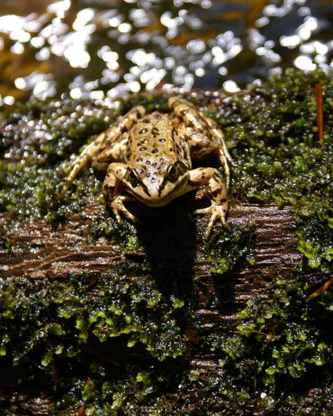 Photograph - Frog On A Log 2 by Ben Upham III