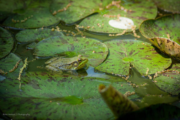 Photograph - Froggy Bottom by Ross Henton
