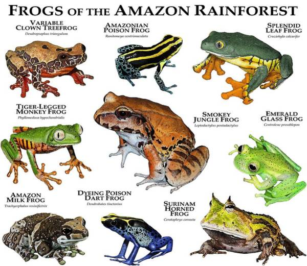 Wall Art - Photograph - Frogs Of The Amazon Rainforest by Roger Hall
