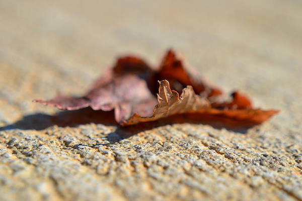 Photograph - From My Heart by Melanie Moraga