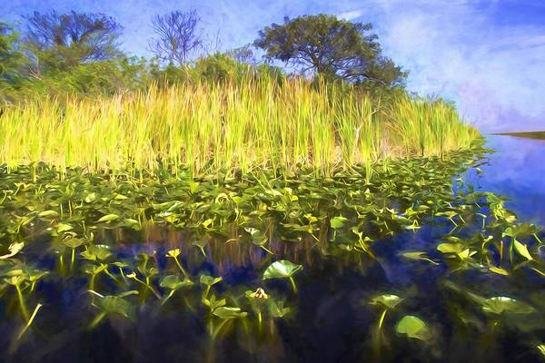 Photograph - From The Lily Pads by Alice Gipson
