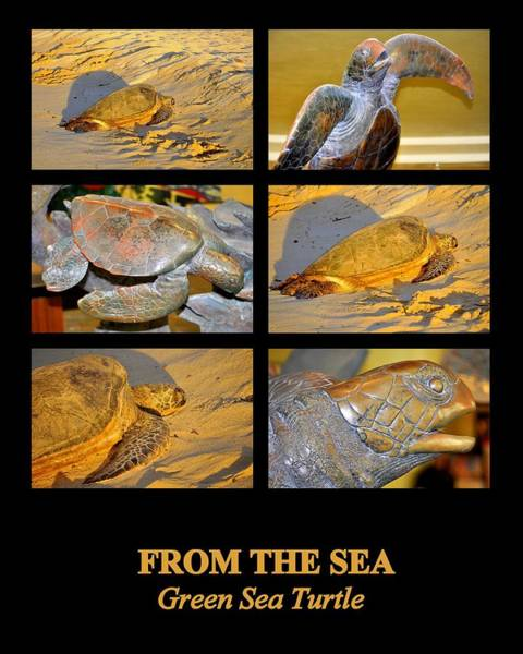 Photograph - From The Sea by AJ  Schibig