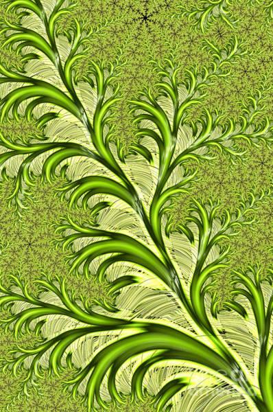 Ferns Digital Art - Fronds by John Edwards