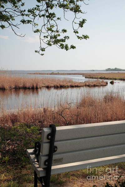 Photograph - Front Row Seat At Blackwater Wildlife Refuge In Maryland by William Kuta