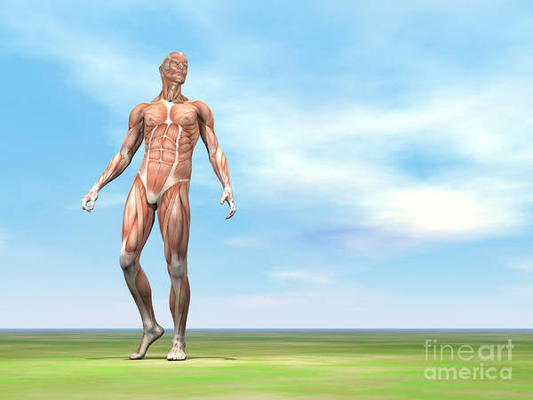 Muscle Tissue Digital Art - Front View Of Male Musculature Walking by Elena Duvernay