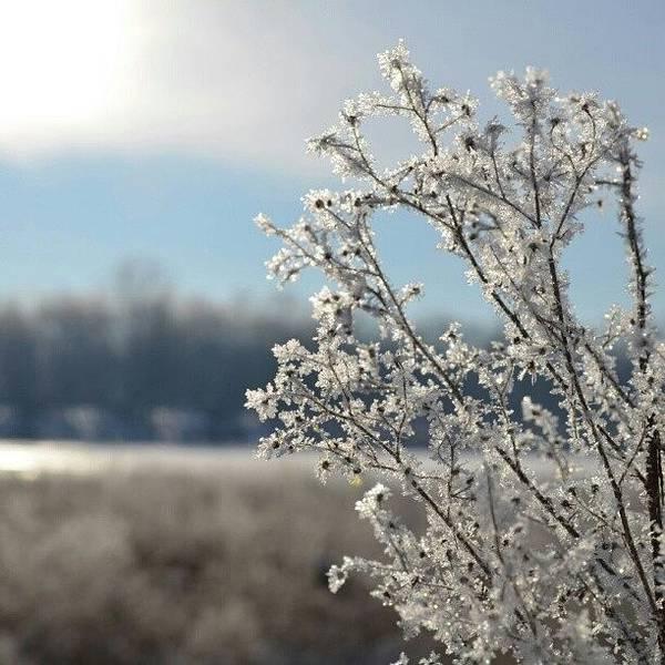 Bright Photograph - Frost by Alexa V