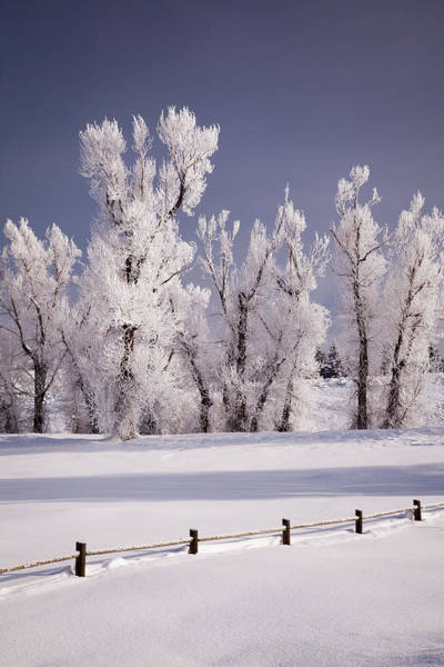 Steamboat Springs Photograph - Frost Covered Trees And Fence, Colorado by Karen Desjardin