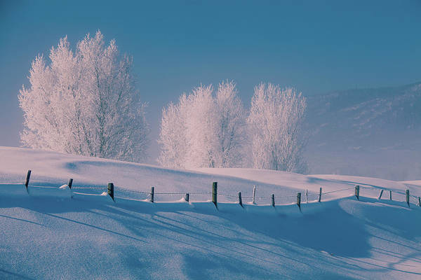 Steamboat Springs Photograph - Frost Covered Trees, Snow And Blue Sky by Karen Desjardin