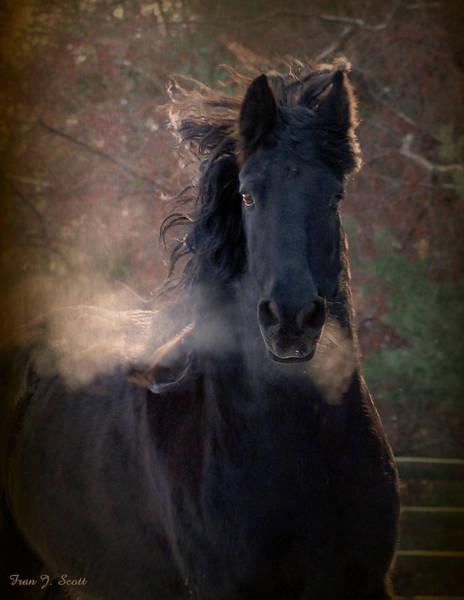 Friesian Horse Photograph - Frost by Fran J Scott