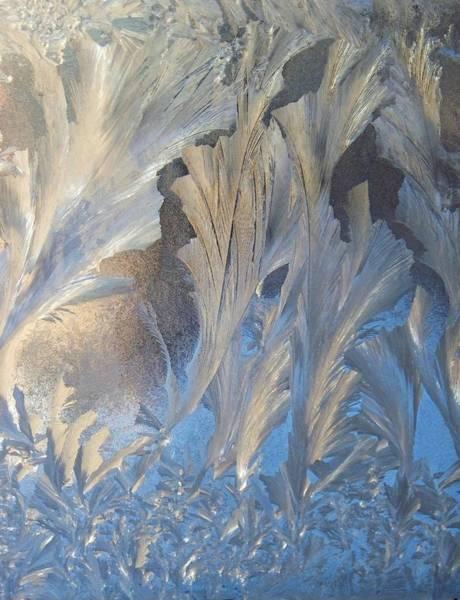 Fern Frost Photograph - Frost On The Window Pane by Joy Nichols