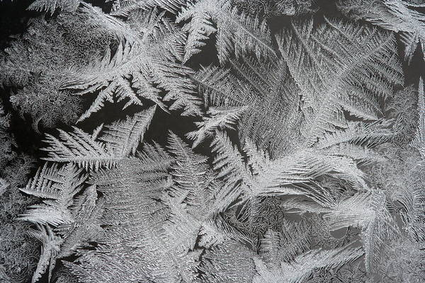 Frost Patterns Art Print by Carolyn Reinhart