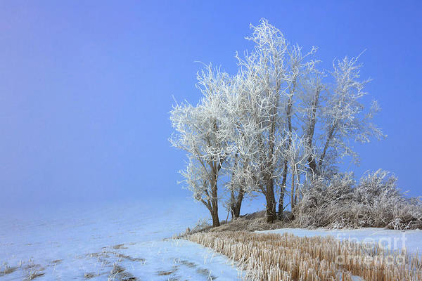 Photograph - Frosted Beauty by Beve Brown-Clark Photography