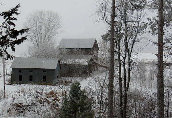 Photograph - Frosted Grey by Wild Thing