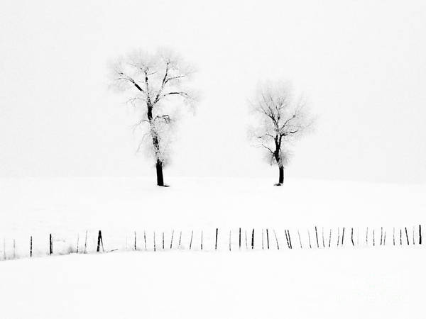 Photograph - Frosted Trees by Karla Weber