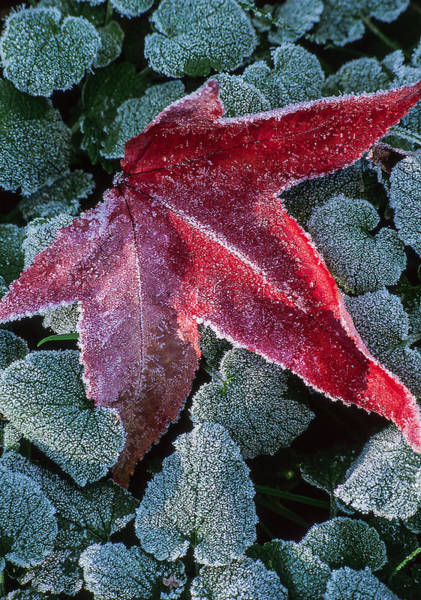 Photograph - Frosty Delight by Dale Kincaid