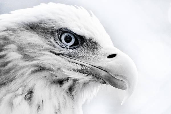 Bald Eagle Photograph - Frosty Eagle by Shane Holsclaw