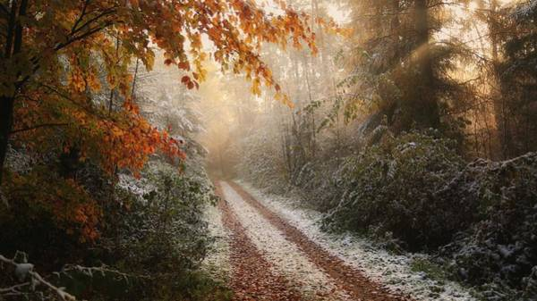 Rural Photograph - Frosty Fall by Vincent Croce