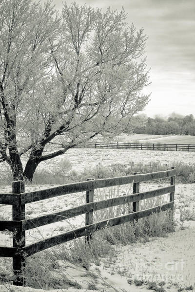 Wall Art - Photograph - Frosty Fence by Roger Bailey