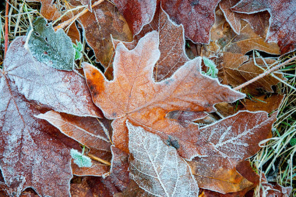 Photograph - Frosted Winter Colors by Roxy Hurtubise
