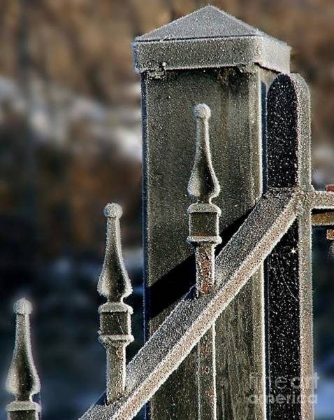 Photograph - Frosty Gate by Donna Cavanaugh