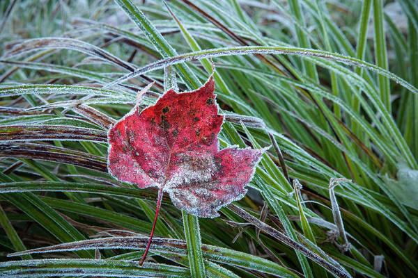 Waterbury Photograph - Frosty Leaf In Autumn  Waterbury by Jenna Szerlag