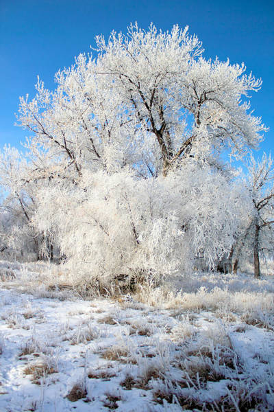 Photograph - Frosty Morning by Shane Bechler